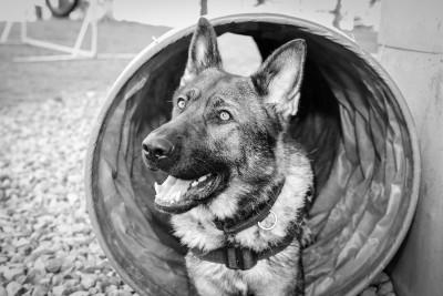 <strong>Brigade Canine</strong> - Police cantonale vaudoise<br /> © PolCant